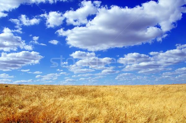 Alan bölge Portekiz arka plan yaz çiftlik Stok fotoğraf © inaquim