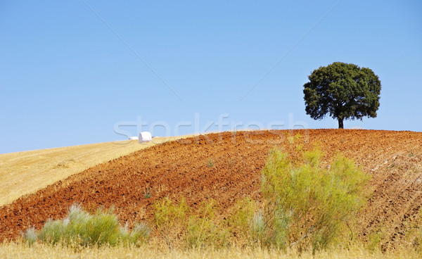 Chêne domaine Portugal fleur arbre printemps Photo stock © inaquim
