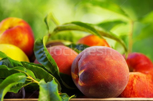 Peach on basket of various fruits Stock photo © inaquim