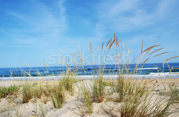 Vue belle paysage dune flore plage Photo stock © inaquim