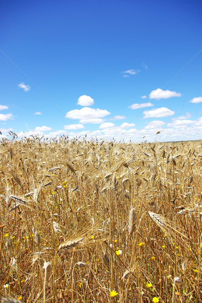 Blue Sky небе лет синий фермы Сток-фото © inaquim