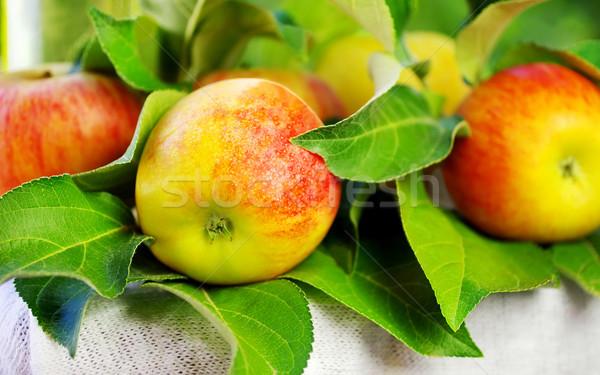 Olgun kırmızı elma tablo gıda doğa Stok fotoğraf © inaquim