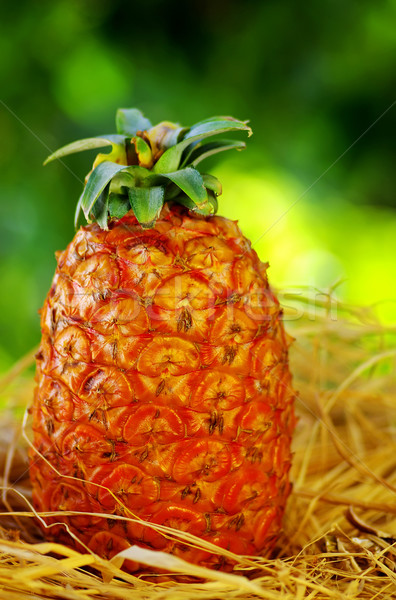 Pineapple on green background Stock photo © inaquim