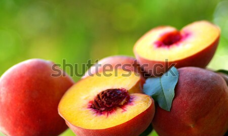 緑 食品 背景 白 農業 ストックフォト © inaquim