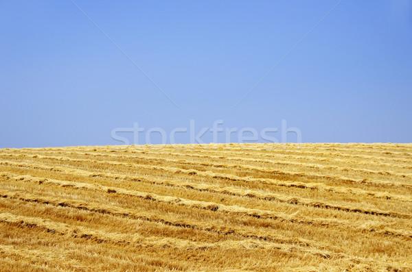Paisagem trigo palha grama natureza fundo Foto stock © inaquim