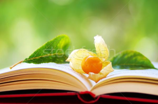 Meyve açık kitap gıda kitap doğa arka plan Stok fotoğraf © inaquim