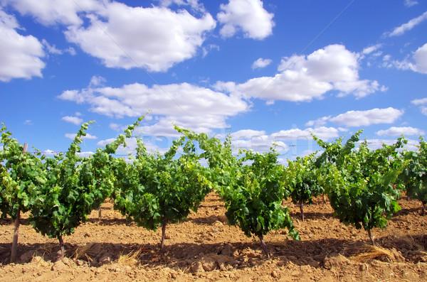 Verde vinha sul Portugal nuvens vinho Foto stock © inaquim
