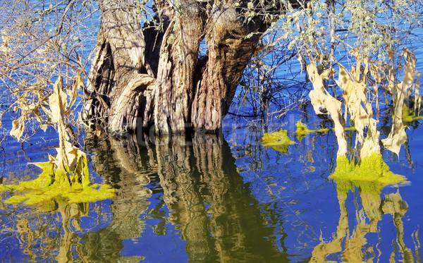 Olajfa tó égbolt víz textúra fű Stock fotó © inaquim
