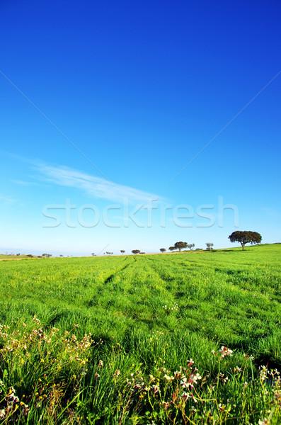 árvores verde campo Portugal primavera fundo Foto stock © inaquim