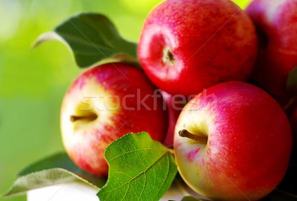 Maduro vermelho maçãs tabela verde comida Foto stock © inaquim