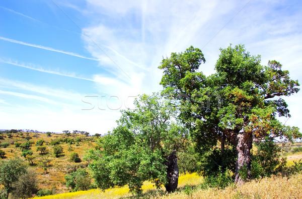 Chêne arbres forêt Portugal arbre herbe Photo stock © inaquim