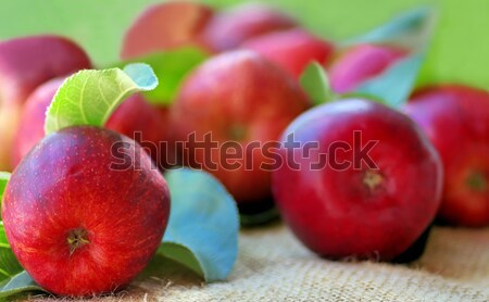 Red apples on green background  Stock photo © inaquim