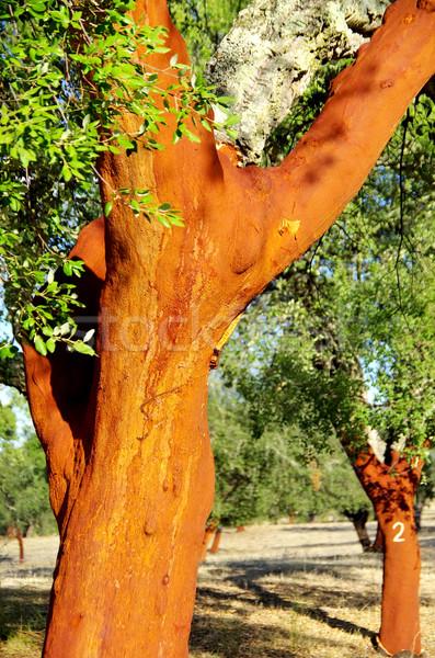 Cork Trees Stripped  Stock photo © inaquim