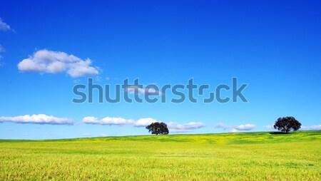 Ağaçlar yeşil alan Portekiz gökyüzü bahar Stok fotoğraf © inaquim