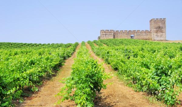 Zöld szőlőskert kastély étel bor fal Stock fotó © inaquim