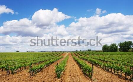 畑 南 ポルトガル 食品 草 フルーツ ストックフォト © inaquim