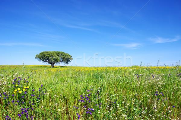 Oak tree at flowery field Stock photo © inaquim