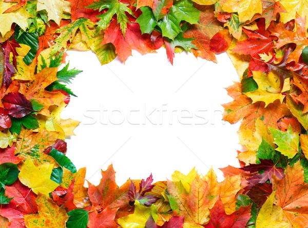 Herbstlaub Rahmen farbenreich Hintergrund orange Blätter Stock foto © IngaNielsen
