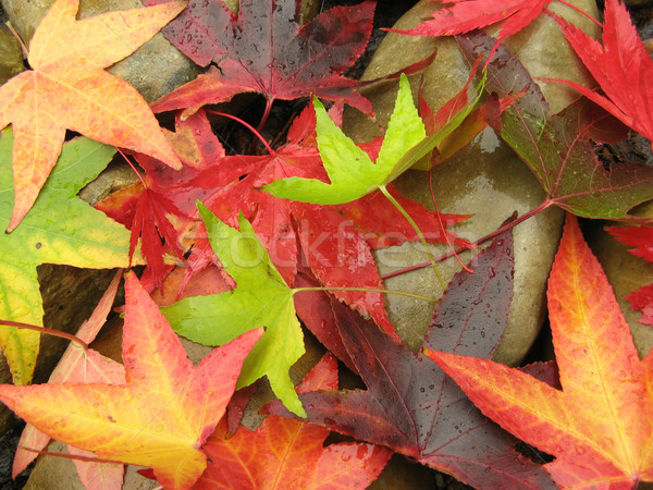 Autumn leaves on rocks Stock photo © IngaNielsen