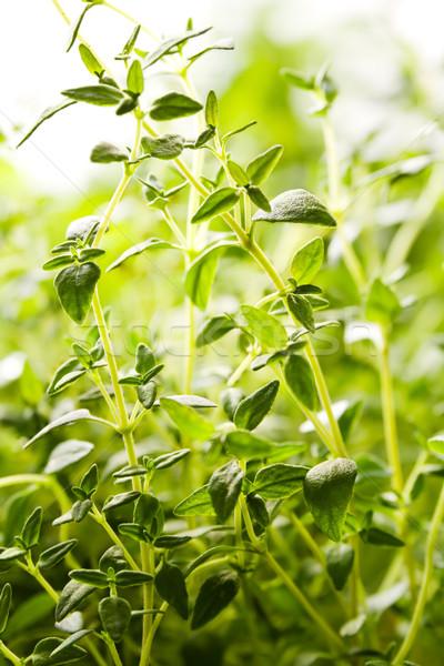 Növények közelkép friss zöld kicsi levelek Stock fotó © IngaNielsen