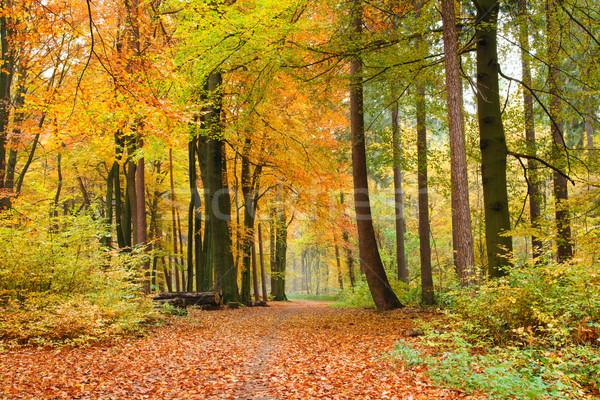 Najaar bos mooie blad bomen bladeren Stockfoto © IngaNielsen