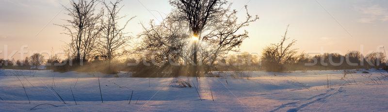 солнце дерево зима Панорама изображение красивой Сток-фото © IngaNielsen