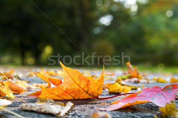 Sonbahar yaprakları kaldırım akşam güneş küçük sokak Stok fotoğraf © IngaNielsen