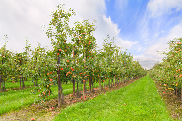 Appelboomgaard grond Duitsland winderig najaar weer Stockfoto © IngaNielsen