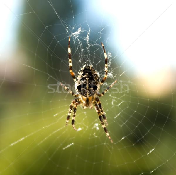 庭園 クモ クモの巣 背景 ウェブ 緑 ストックフォト © inoj