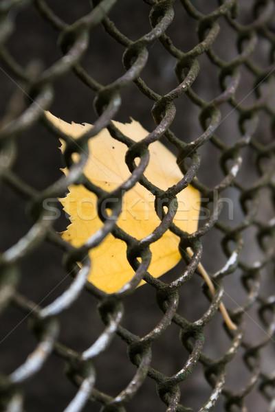 クローズアップ 黄色 葉 フェンス 森林 自然 ストックフォト © inoj