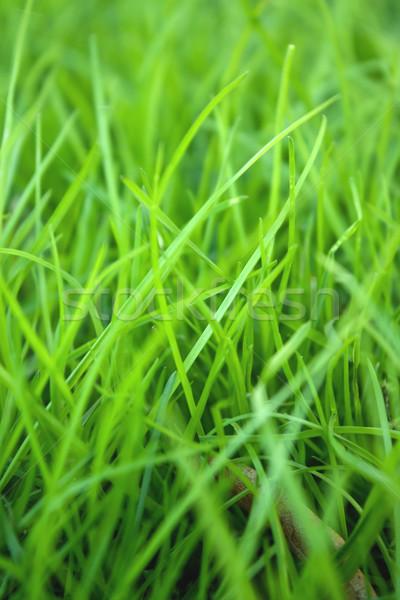 Fű tavasz absztrakt természet nyár farm Stock fotó © inoj