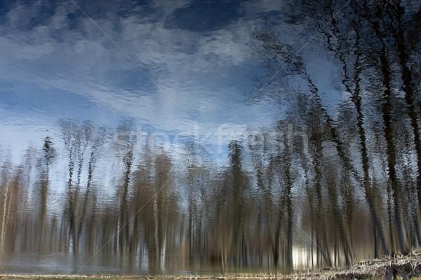 木 水 空 抽象的な 自然 風景 ストックフォト © inoj