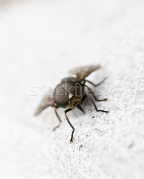Close-up of fly  Stock photo © inoj