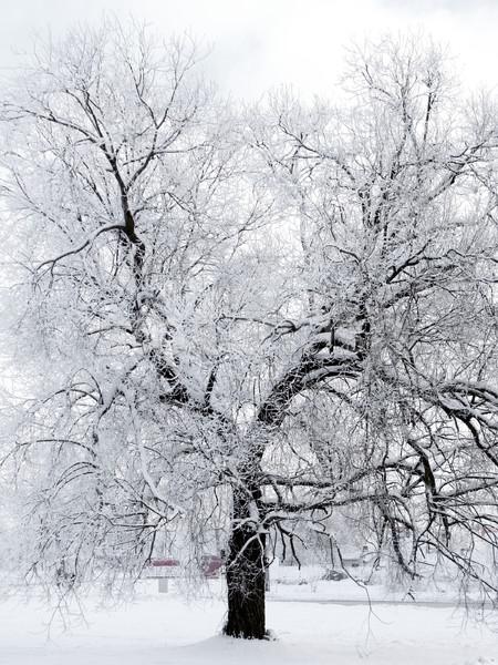 Tél fa város tájkép utca hó Stock fotó © inoj