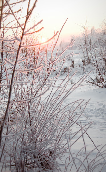 Tél naplemente fa nap tájkép mező Stock fotó © inoj