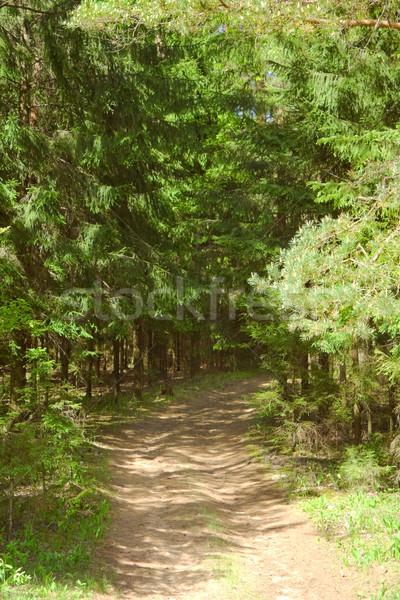 森林 道路 木材 葉 夏 緑 ストックフォト © inoj