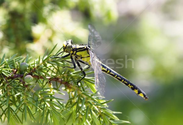 Yusufçuk çim vücut arka plan hızlandırmak hayat Stok fotoğraf © inoj