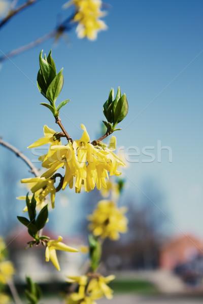 Сток-фото: небе · весны · природы · фон · завода · парка
