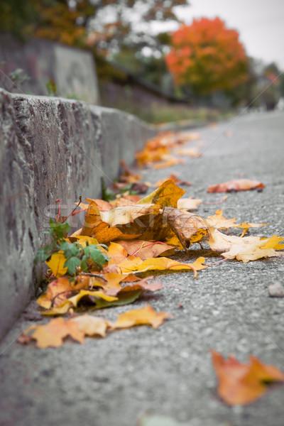 葉 通り 美 オレンジ 緑 色 ストックフォト © inoj