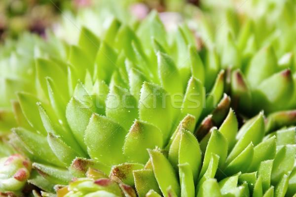 Yeşil bitki çim arka plan alan barış Stok fotoğraf © inoj
