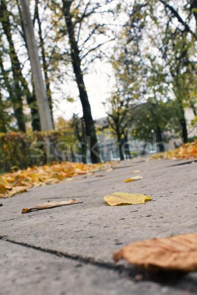 Yaprakları sokak güzellik turuncu yeşil renk Stok fotoğraf © inoj
