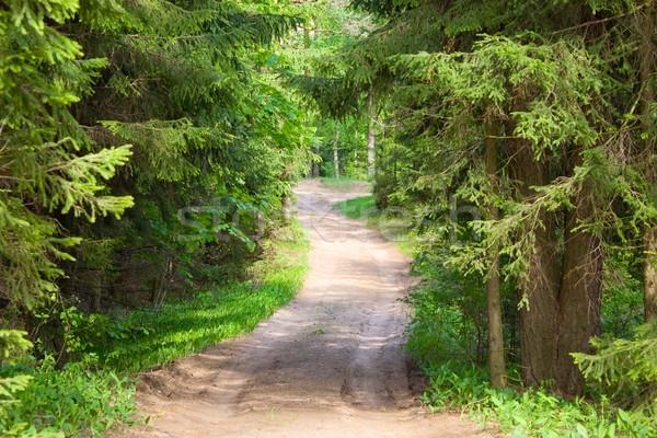 Erdő út tavasz fa levél park Stock fotó © inoj
