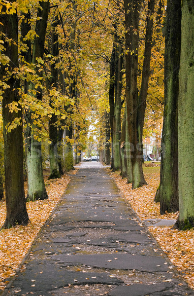 Sonbahar geçit şehir yol doğa sokak Stok fotoğraf © inoj