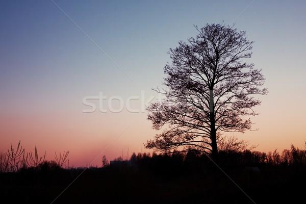дерево силуэта закат небе весны природы Сток-фото © inoj
