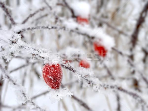 Piros tél hó fa rózsa háttér Stock fotó © inoj