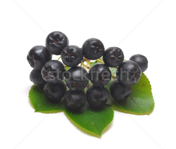 black chokeberry Stock photo © inxti