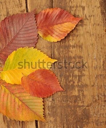 Sarı sonbahar yaprakları eski ahşap karanlık doku ahşap Stok fotoğraf © inxti