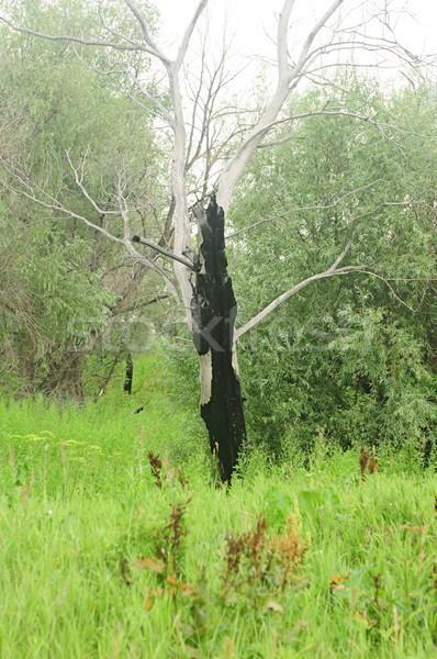 árbol incendios forestales madera fondo negro Foto stock © inxti