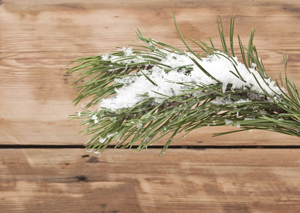 Christmas evergreen spruce tree with fresh snow against wooden w Stock photo © inxti