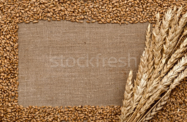 Wheat ears on rough sack material  Stock photo © inxti